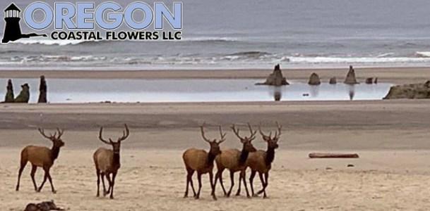 elk on beach