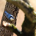 The Nuthatch Hatches A Nut Plan