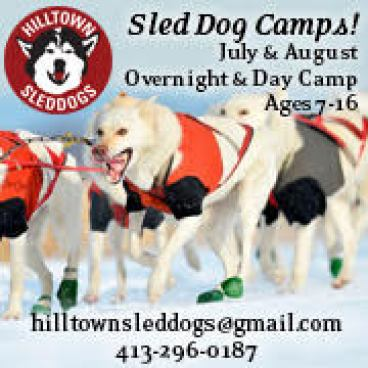 Photograph of sled dogs with text and graphic overlay for Hilltown Sleddogs summer camps.