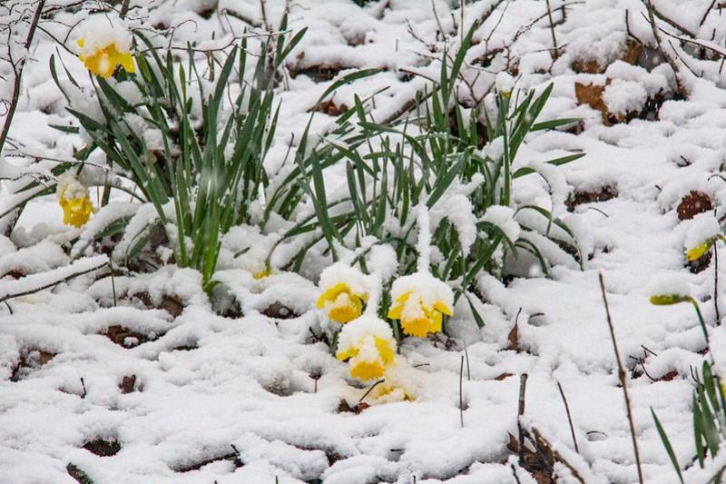 Snow Day15