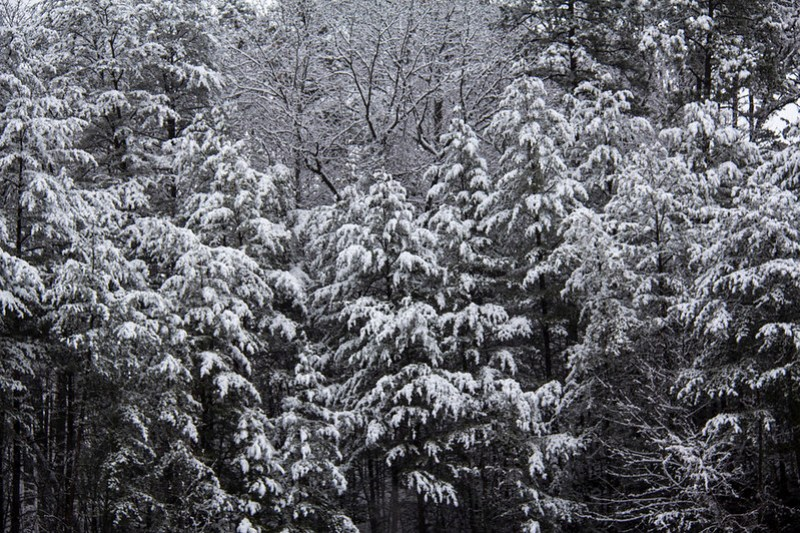 Snow Day25