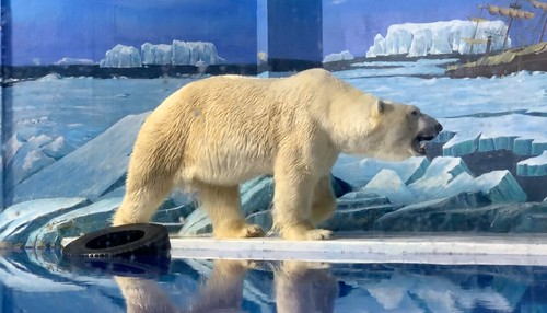 2019 CCA Investigation into Harbin Polar Land