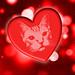 Feline Valentine