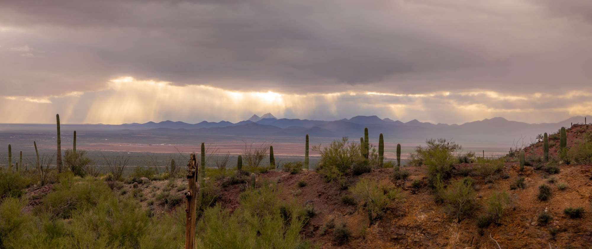 12.24. Saguaro National Park
