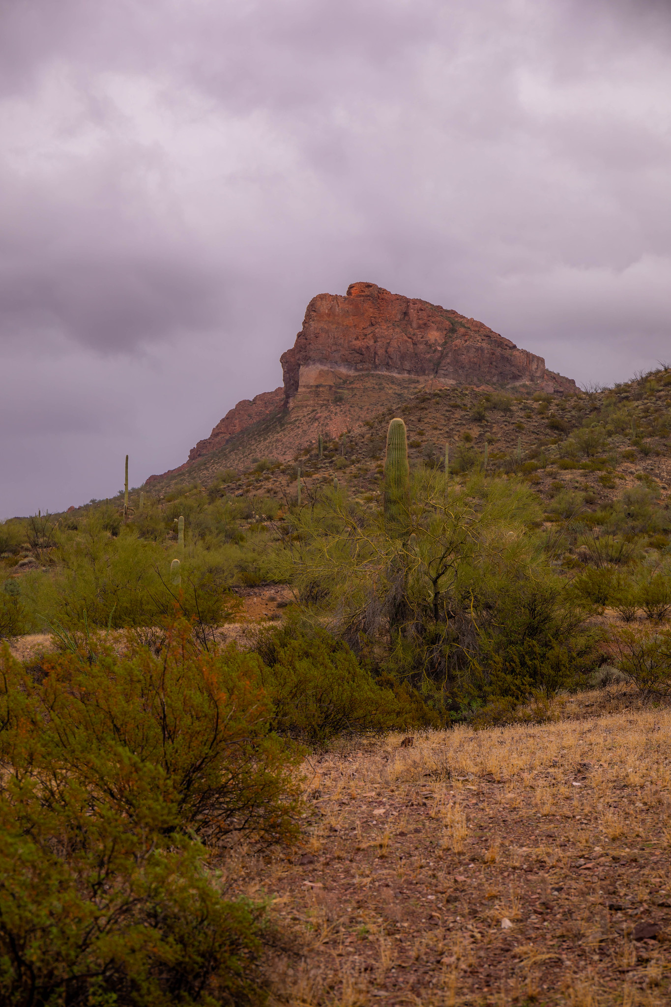 12.26. Organ Pipes National Monument
