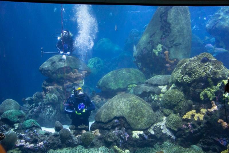 Tennessee Aquarium73