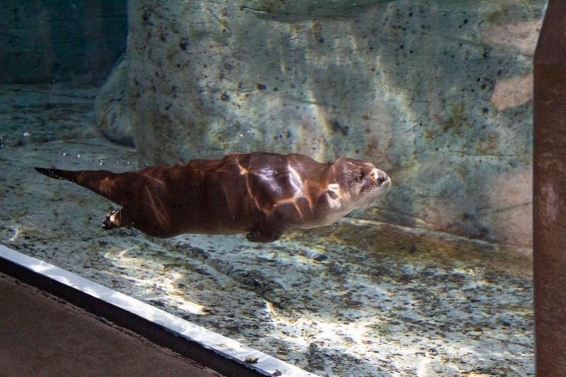 Tennessee Aquarium3