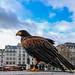A Harris Hawk sang in Trafalgar Square...