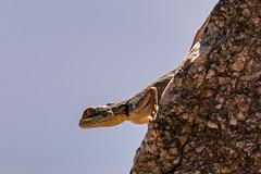 Mauritania wild life
