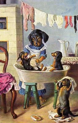 Dogs-Dachshunds-Teckels-Dackel-Puppies-Having-A-Bath