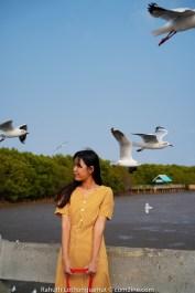 แหล่งถ่ายรูปยอดฮิต นกนางนวลบินผ่าน