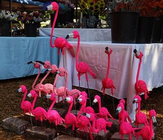 Flamingos, Franschhoek market