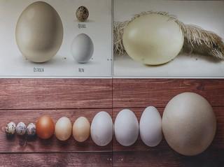 Eggs . . . .