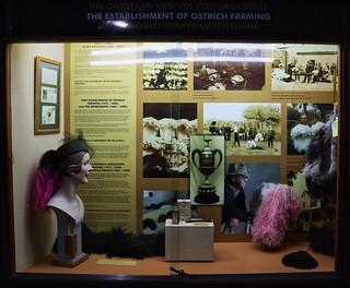 Establishment of ostrich farming - CP Nel museum