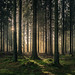 forest series #508
