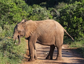 Elephant in the way