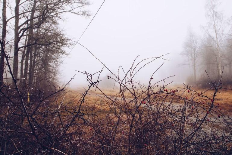 Misty weather - reaktionista.se