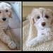 Puppy Evie & Olive