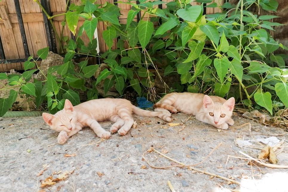 Meidän kahdeksan kissaa