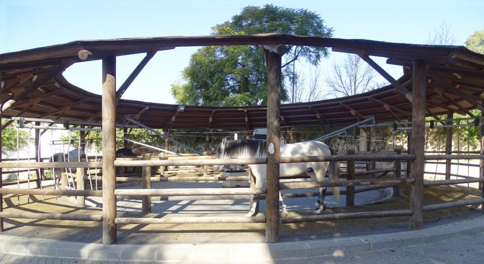 doma de caballo en circulo Real Escuela Andaluza del Arte Ecuestre Jerez de la Frontera Cadiz 04