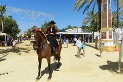 paseo desfile caballo castaño y jinete Parque González Hontoria Feria del Caballo 2014 Jerez de la Frontera Cadiz 02