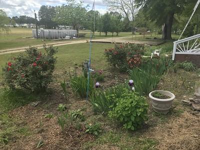 South Porch Garden