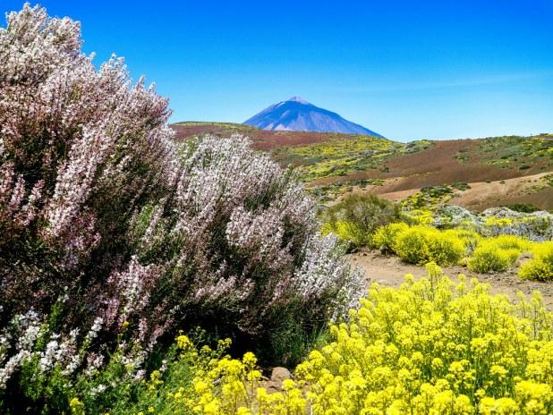 Parque Nacional del Teide en primavera
