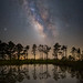 Milky Way Marsh