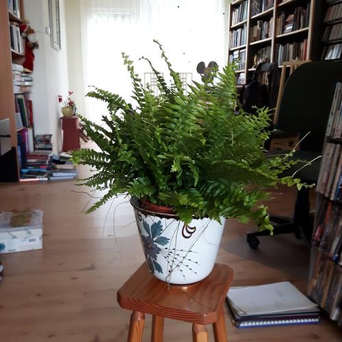 plantjes (1)