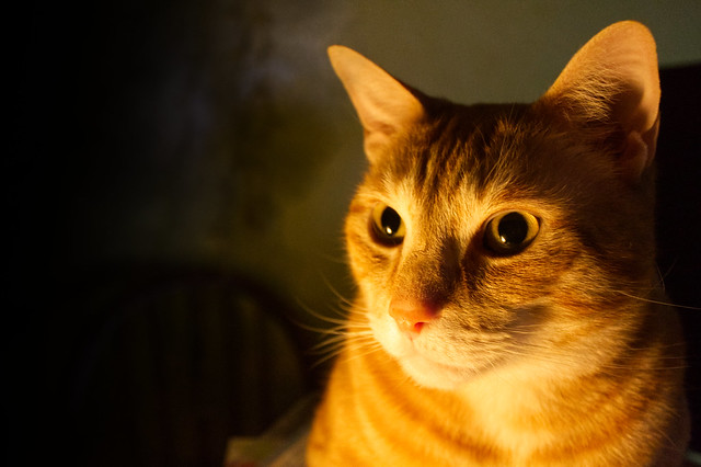 Tabby by Candlelight