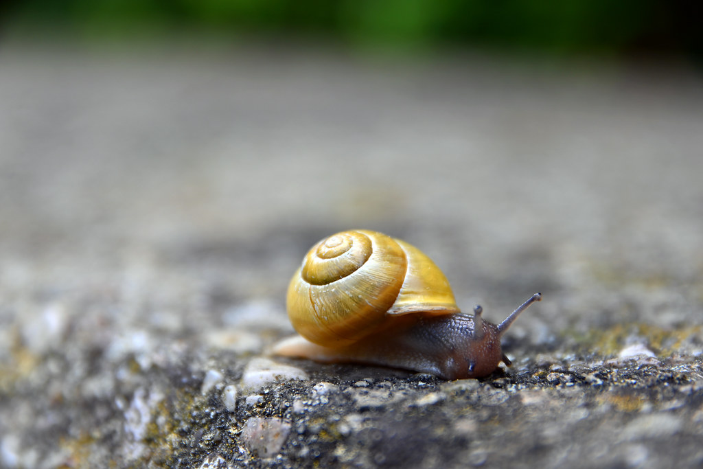 little snail