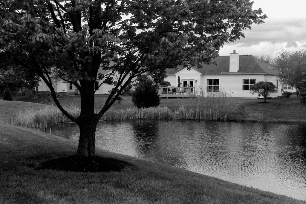 Tree by the pond