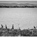 Un rayon de soleil pour sécher les ailes des cormorans face à Dublin