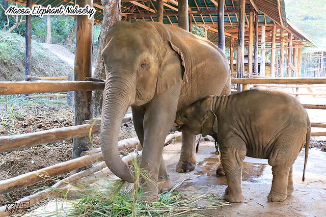 Maesa Elephant Nursery Baby n Mum