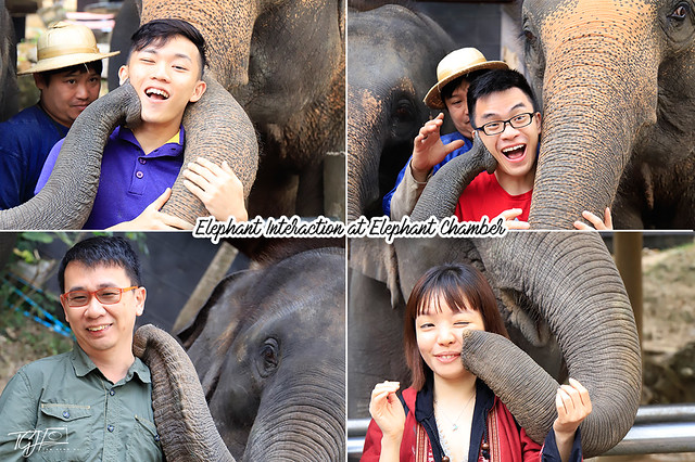 Elephant Kissing