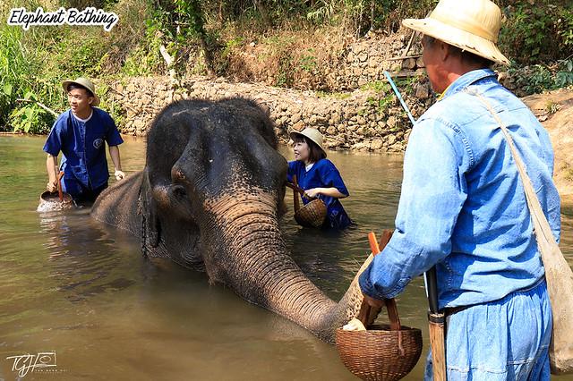 Maesa Elephant Camp Bathing