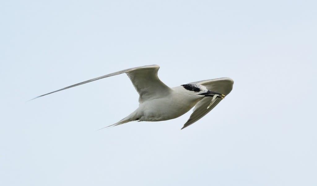 les-ailes-des-oiseaux-se-sont-adaptées--leur-environnement