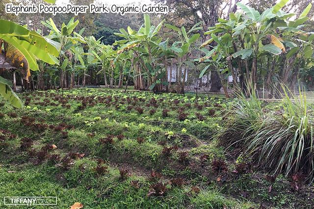 Poopoopaper Park Organic Garden