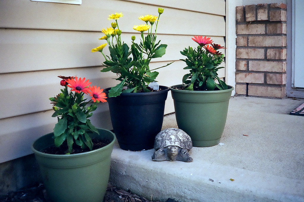 Flower pots on the stoop