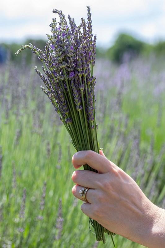 Lookout Lavender Farm30