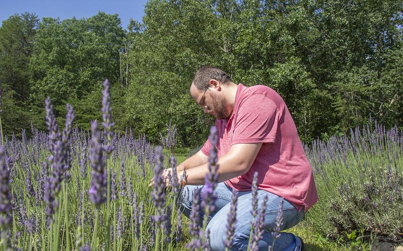 Lookout Lavender Farm13