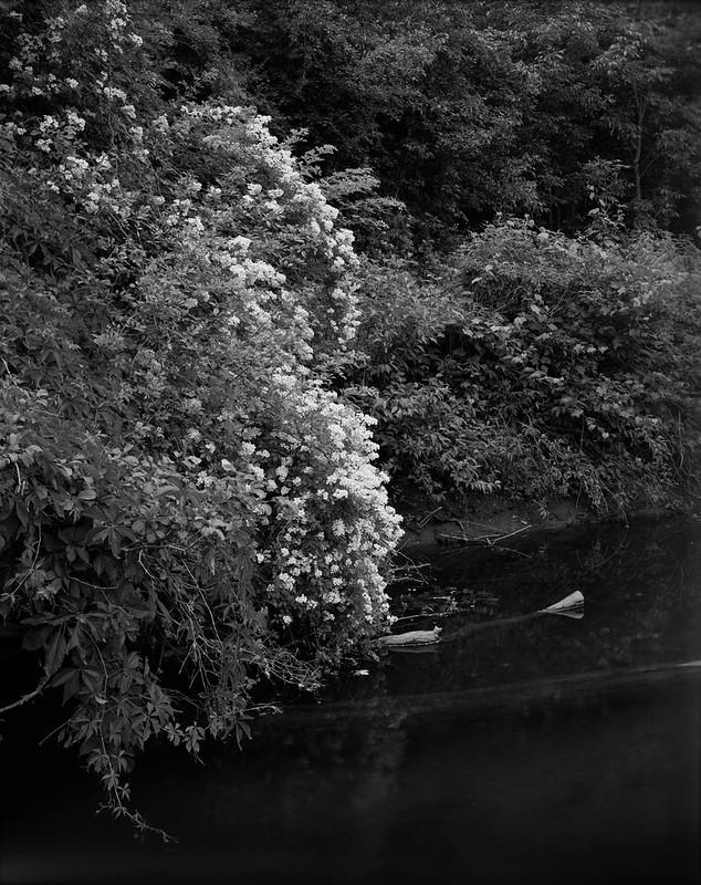 Creekside Bloom