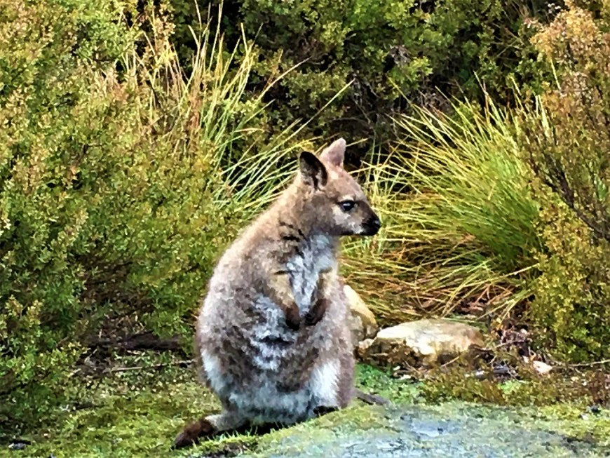 Day 4 - A Wallaby by the road side - Leisurely Drives
