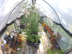 Greenhouse July 30