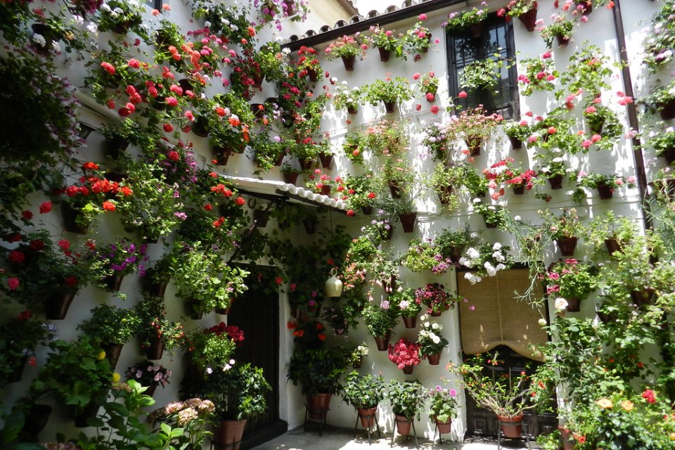 Fiesta de los Patios flores en barrio del Alcázar Viejo Cordoba 03