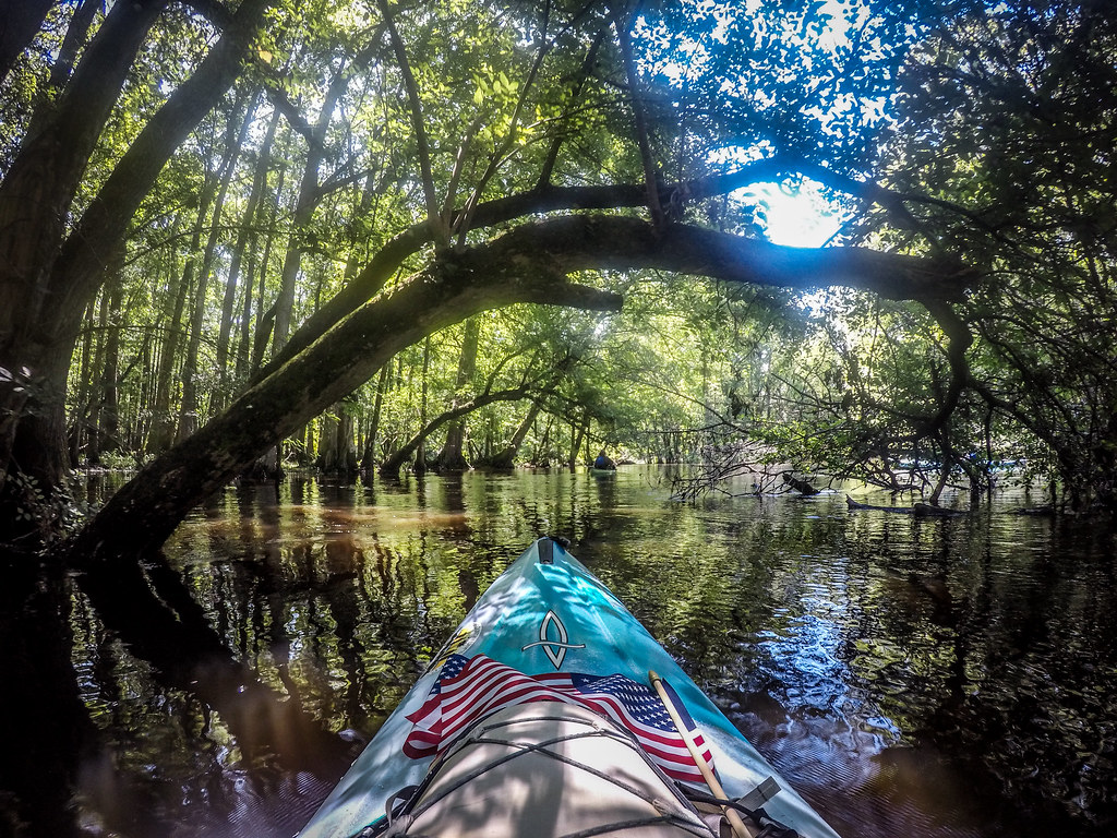 Edisto River - Bobcat to Brabham