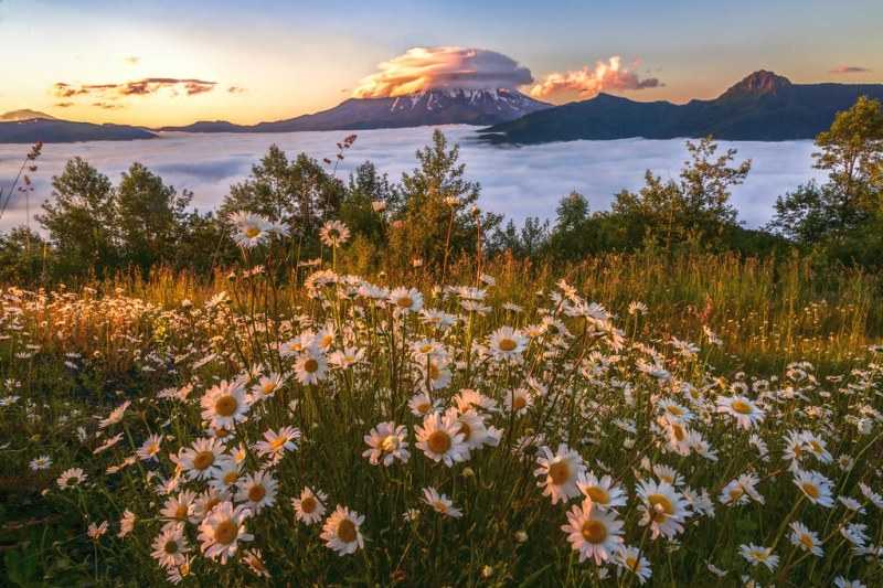 Daisies and the Volcano