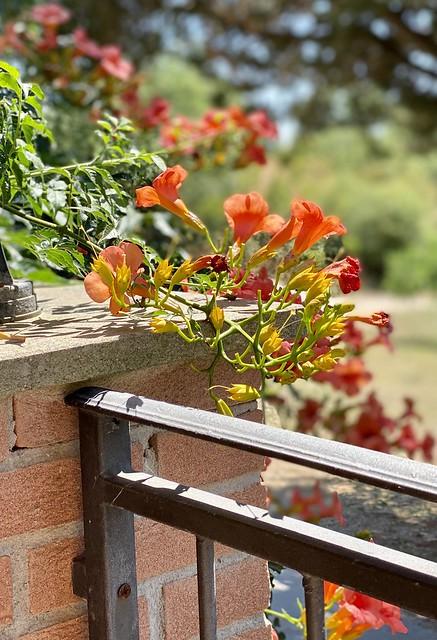 Blumen in der Trattoria le Mandorlaio