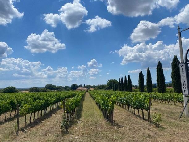 Weinanbau bei Pittigliano