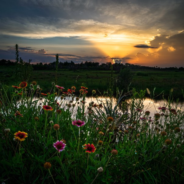 First Light on Wetland Wildflowers